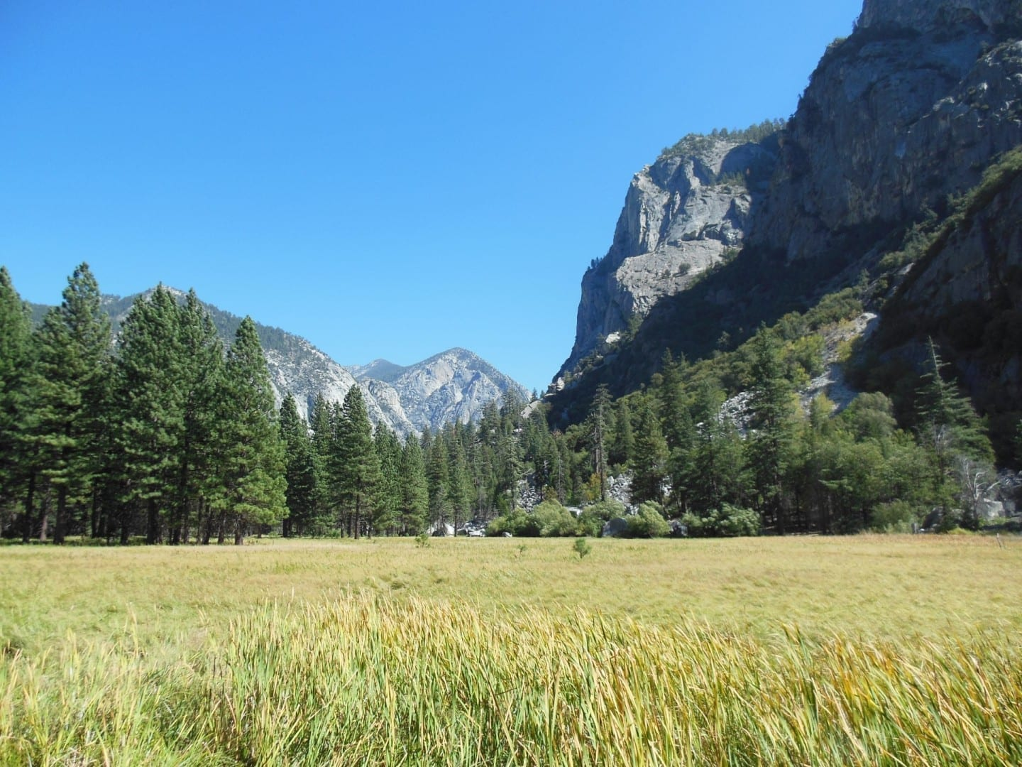 La pradera Zumwalt en el Parque Nacional de Kings Canyon Kings Canyon y Sequoia: Parques Nacionales Estados Unidos