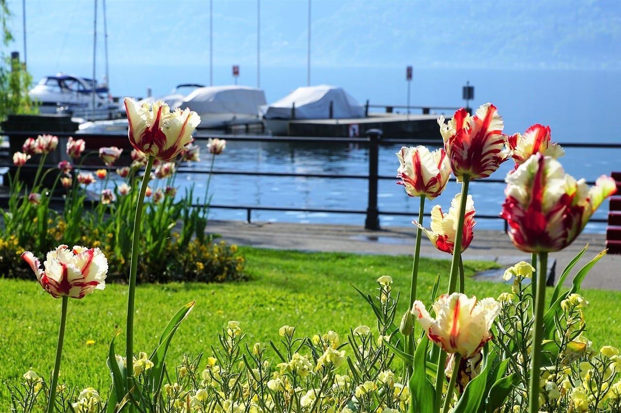 Locarno Tulipanes Flores Suiza