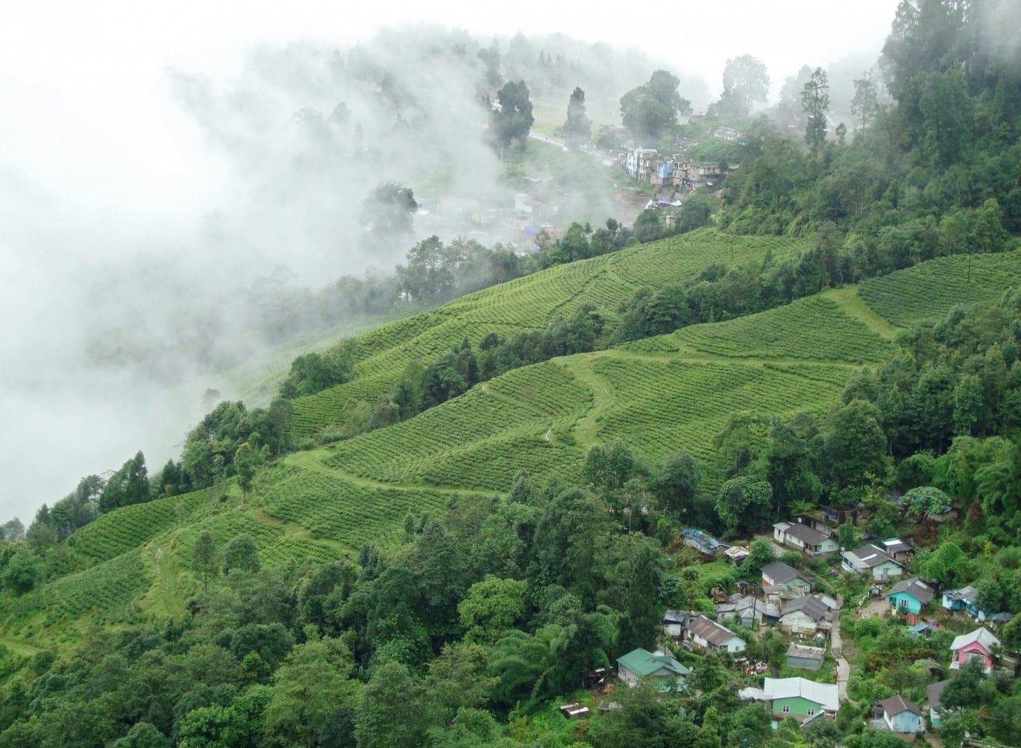 Los jardines de té de Darjeeling Darjeeling India