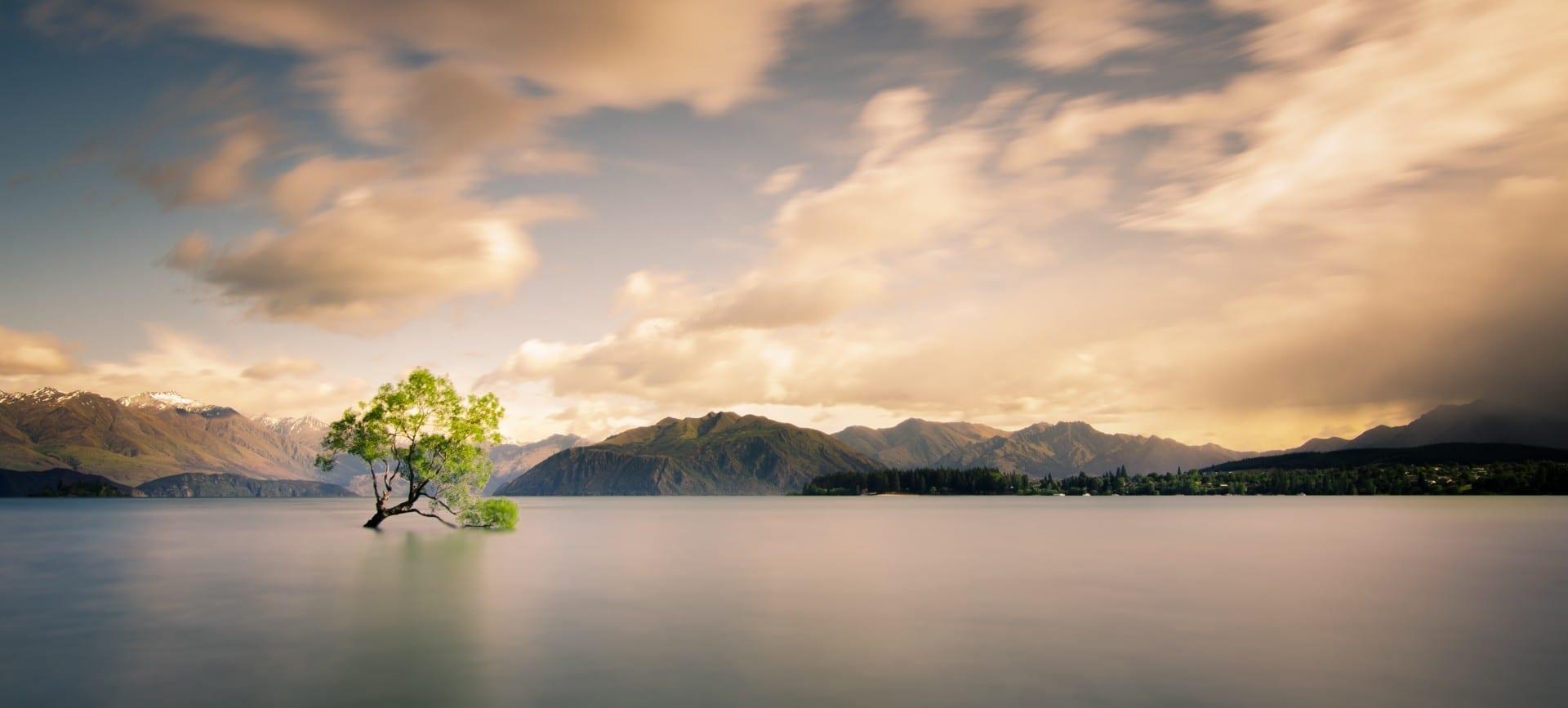 Los veranos en Wanaka tienen vistas pintorescas como este árbol Wanaka Nueva Zelanda