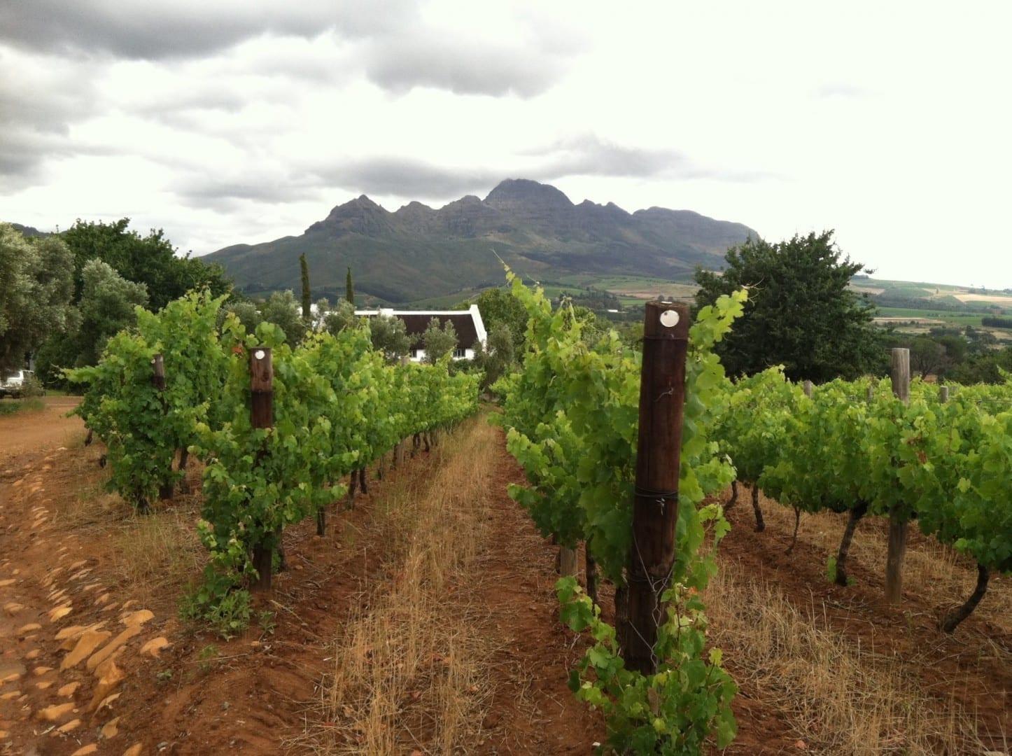Los viñedos de Vriesenhof en la región vinícola de Stellenbosch Stellenbosch República de Sudáfrica