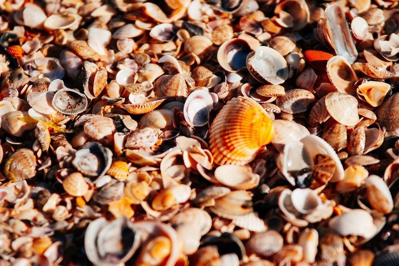 Mar Playa Orange Australia