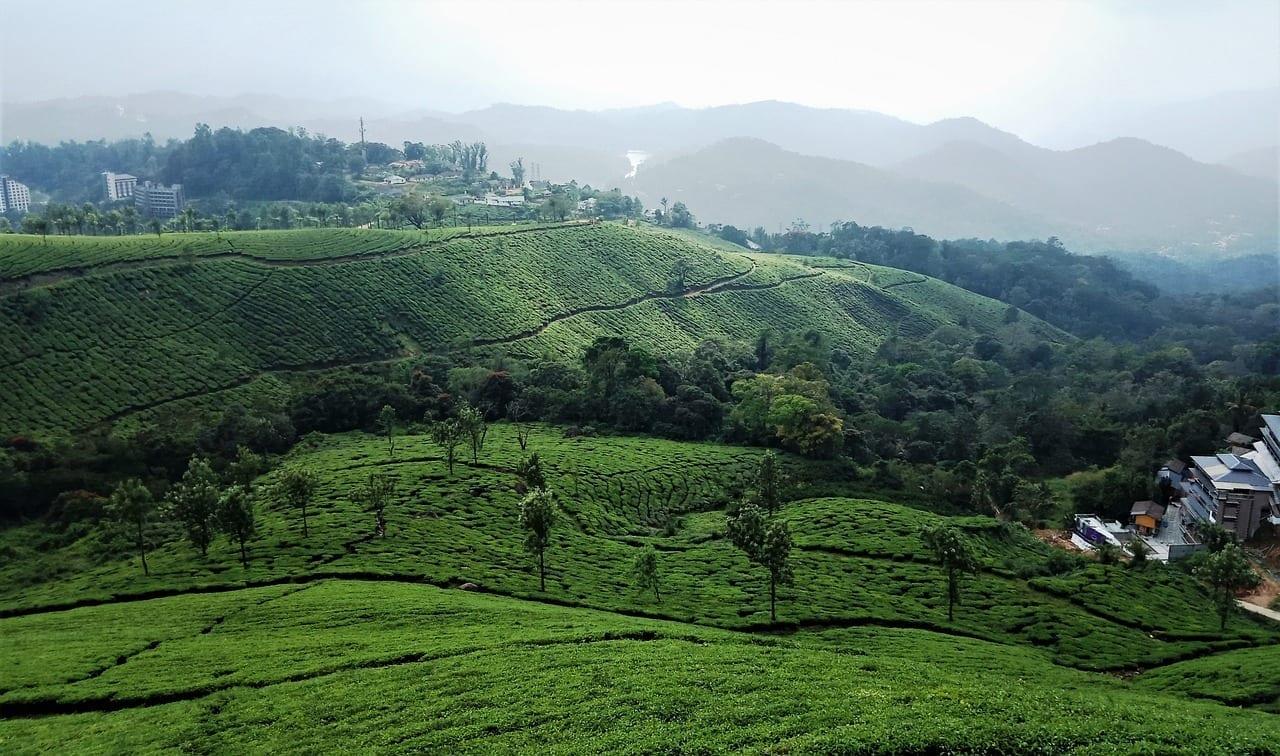 Munnar India Kerala India