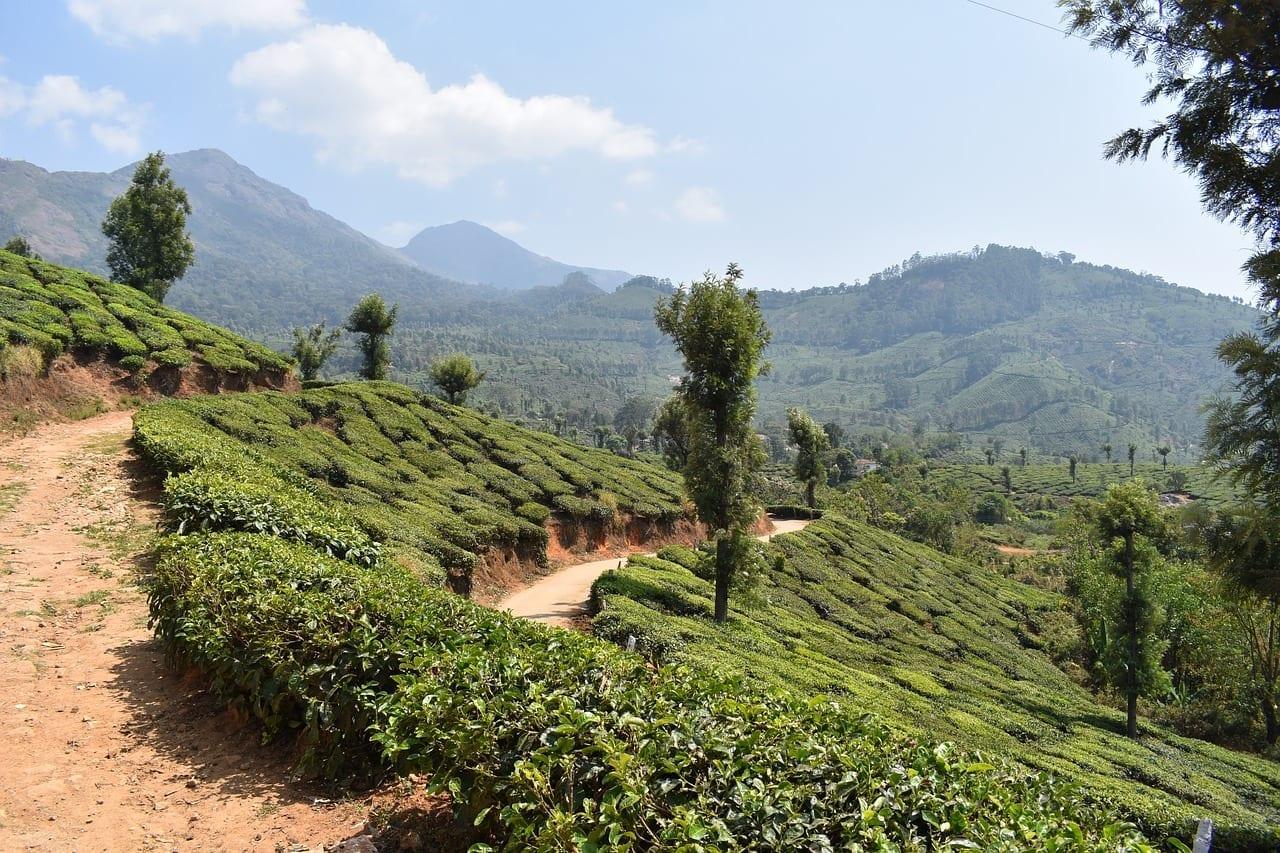 Munnar Kerala India India
