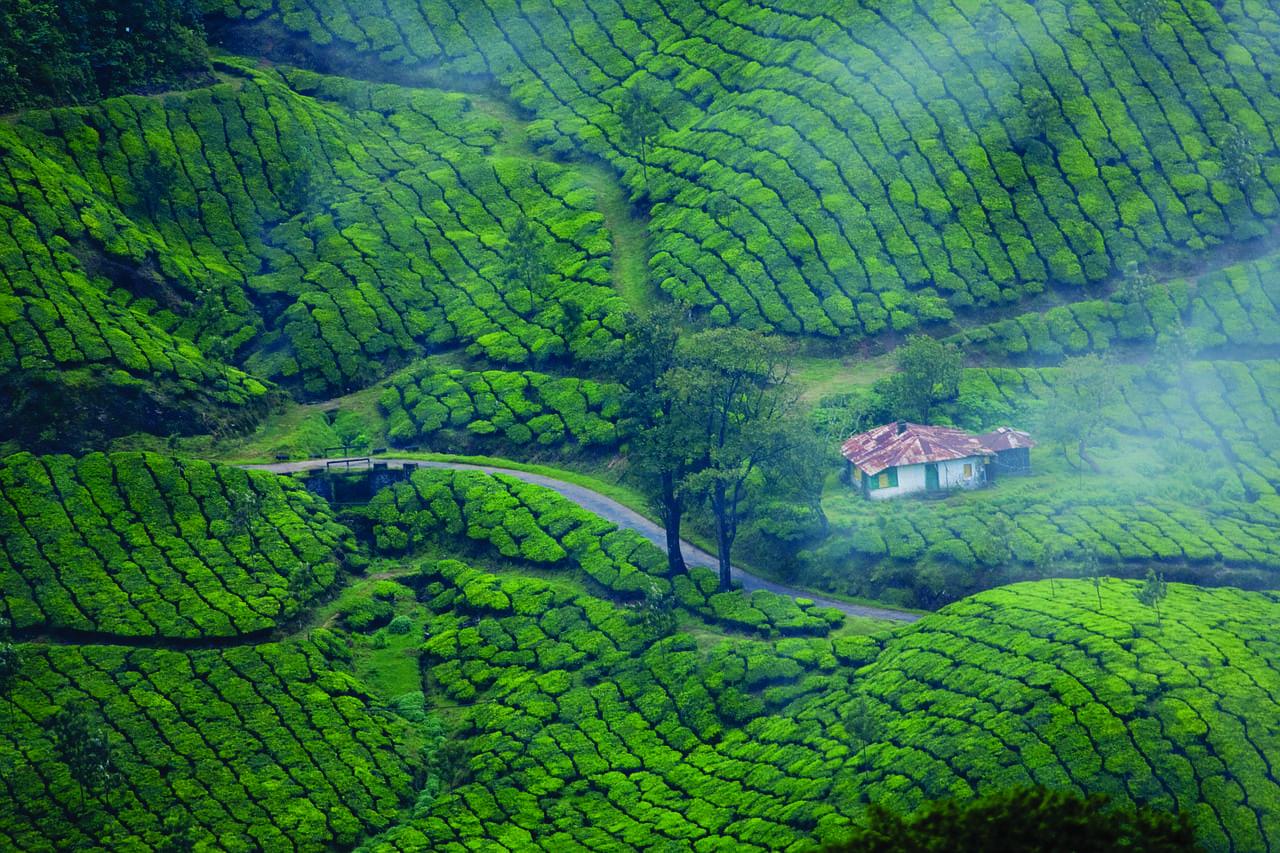 Munnar Kerala Plantación De Té India