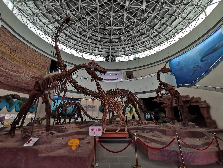 Museo Fujian - Museo de la Naturaleza Fuzhou China