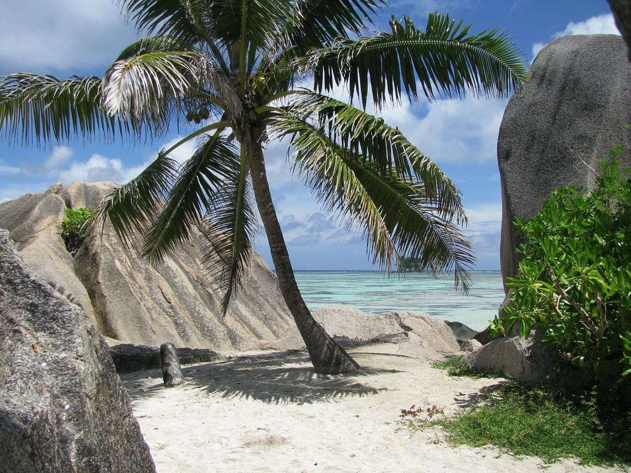 Palma Seychelles La Digue Seychelles