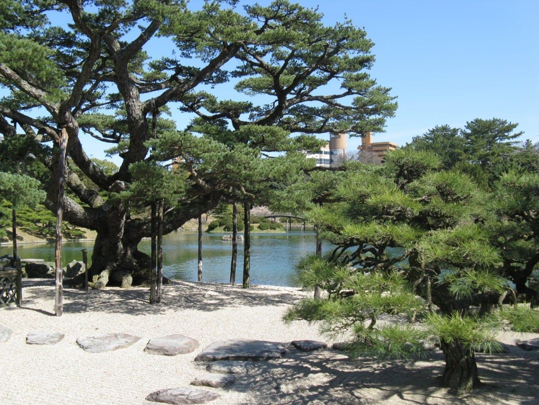 Pinos retorcidos en el Parque Ritsurin Takamatsu Japón