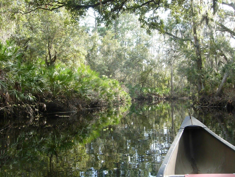 Piragüismo en el Parque Regional de Shingle Creek Kissimmee FL Estados Unidos