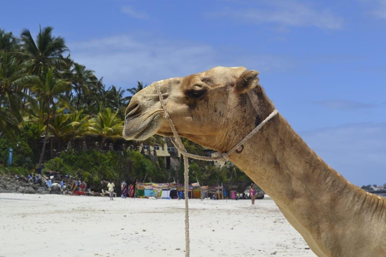 Playa Mombasa áfrica Del Este Kenia