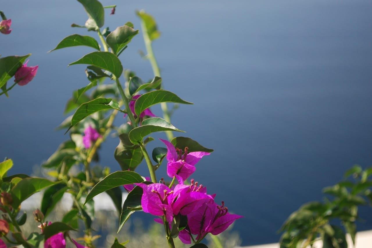 Positano Mar Mediterráneo Costa De Amalfi Italia