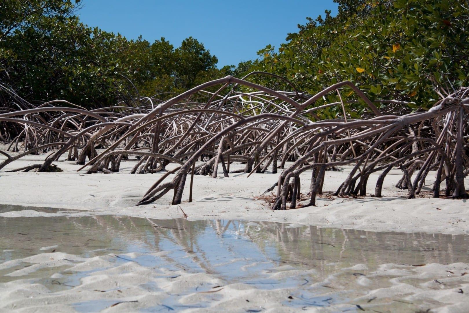 Providenciales Mangroves Providenciales Islas Turks y Caicos