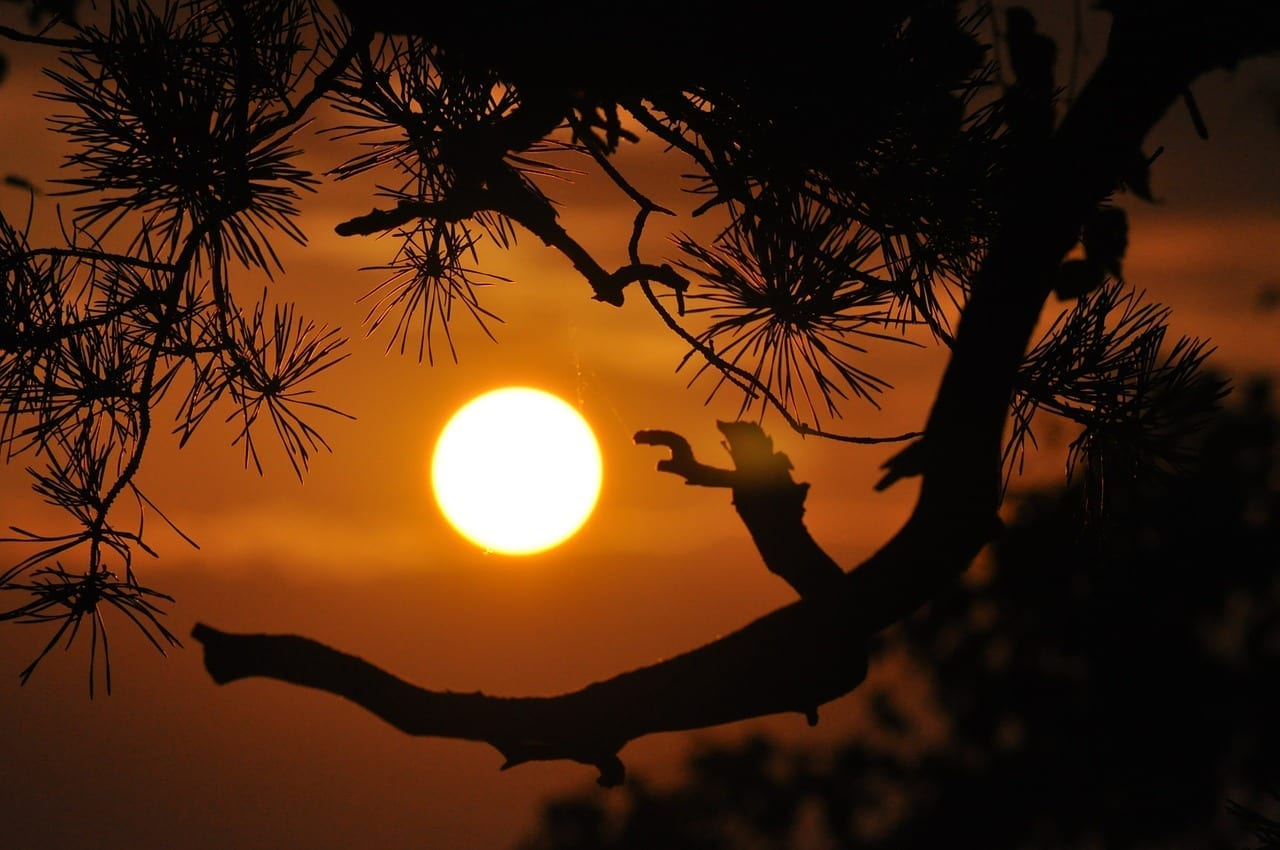Puesta De Sol Orange Ramas Australia