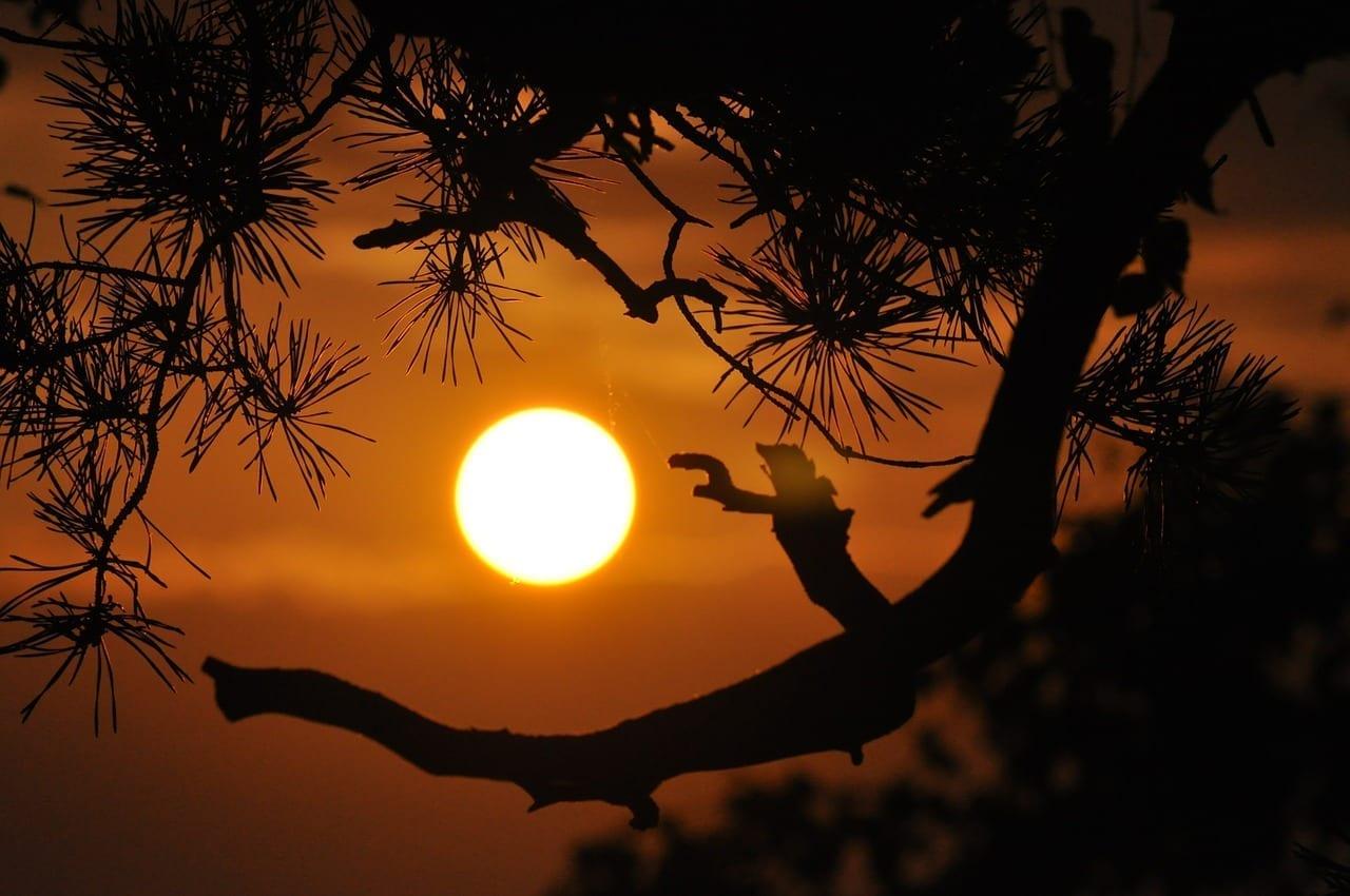 Puesta De Sol Orange Ramas Francia
