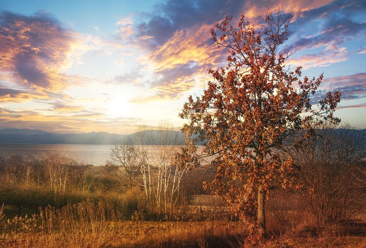 Puesta Del Sol Kazimierz Dolny árbol Polonia