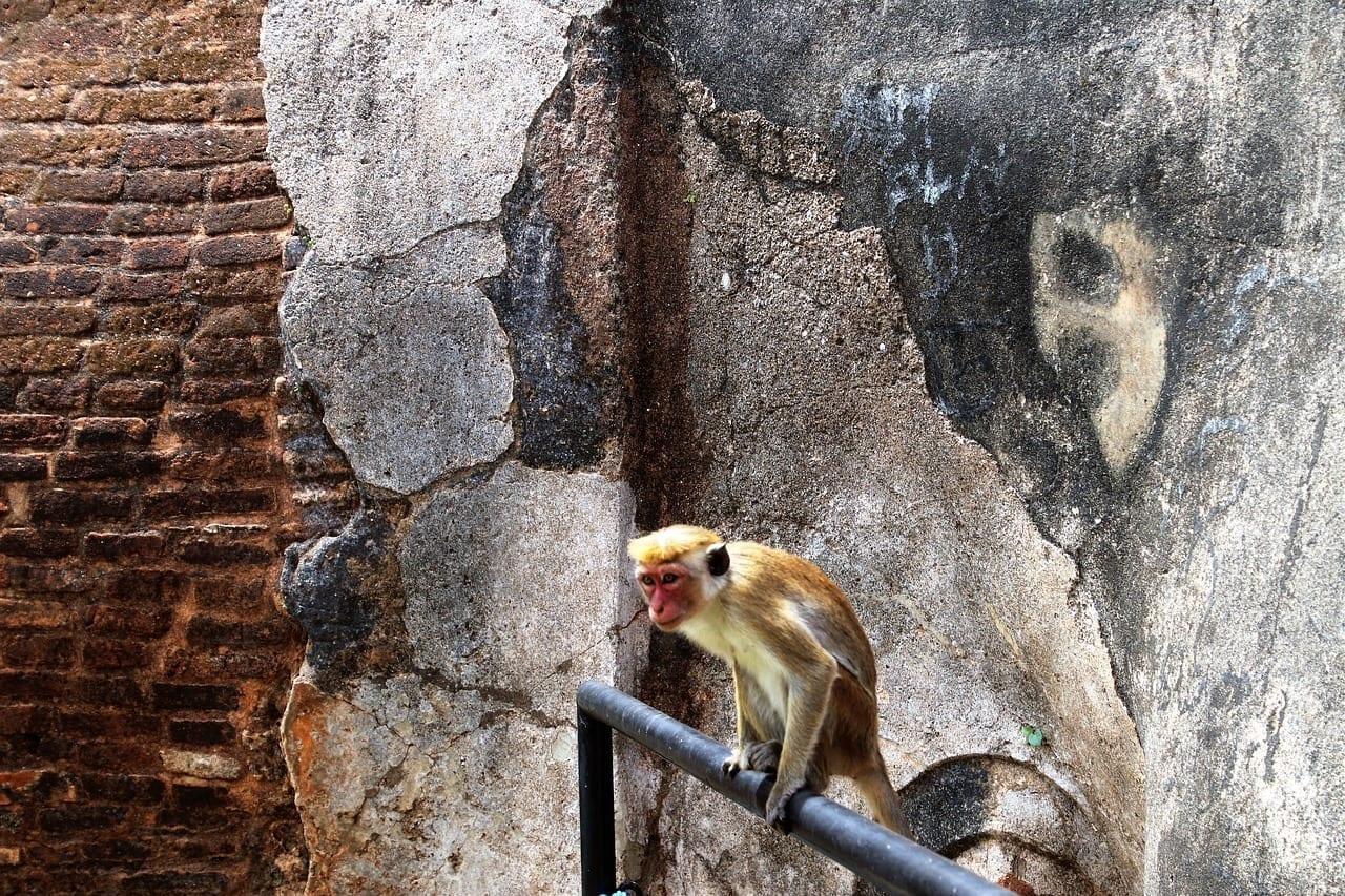 Sigiriya Sri Lanka Naturaleza Sri Lanka
