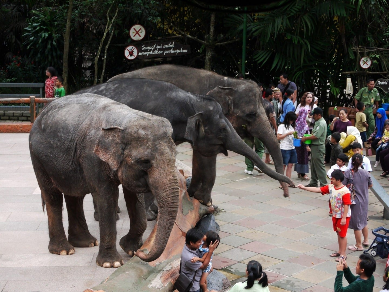 Tres elefantes en el Safari Taman Bogor, Java Indonesia