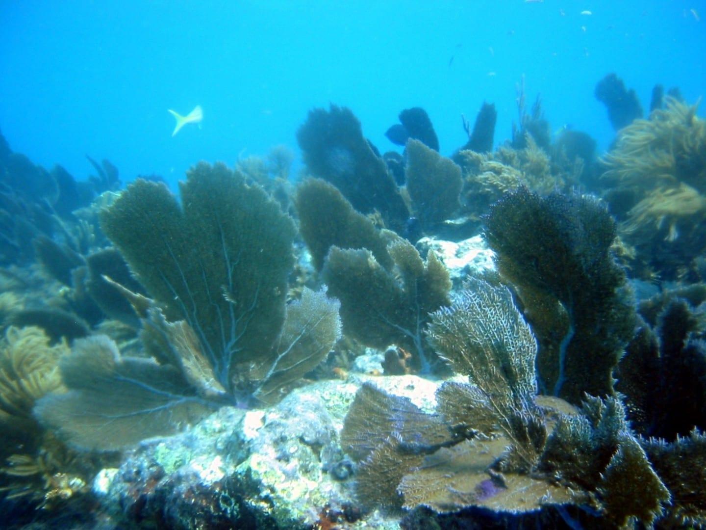 Uno de los arrecifes de coral del Parque Estatal John Pennekamp Cayo Largo FL Estados Unidos