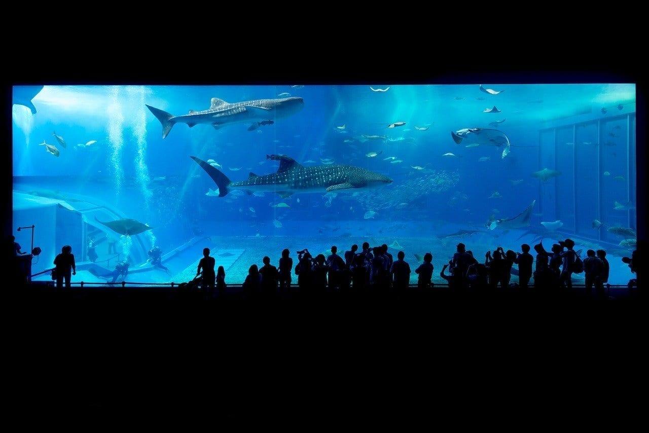 Acuario Tiburón Okinawa Japón