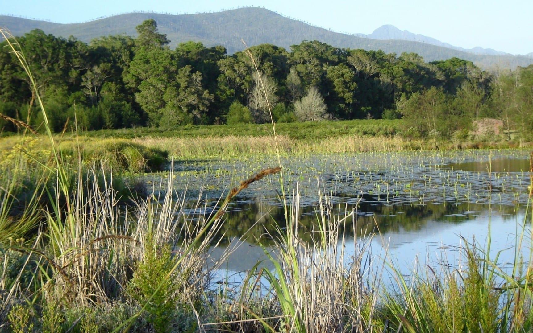 Al otro lado del lago Bass, los fynbos se detienen abruptamente en el borde del bosque. Parque Nacional Tsitsikamma República de Sudáfrica