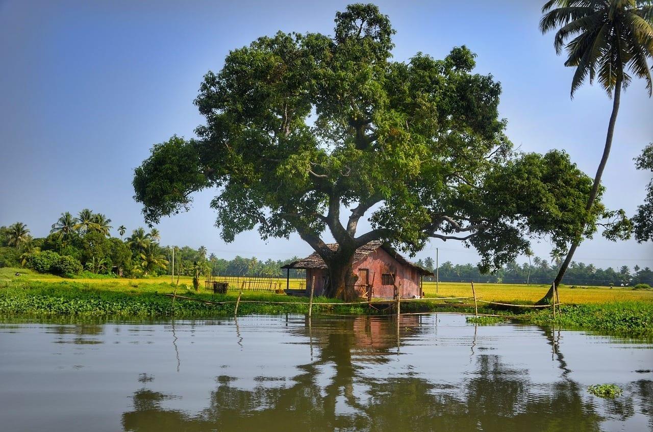 Alleppey Backwaters Kerala India