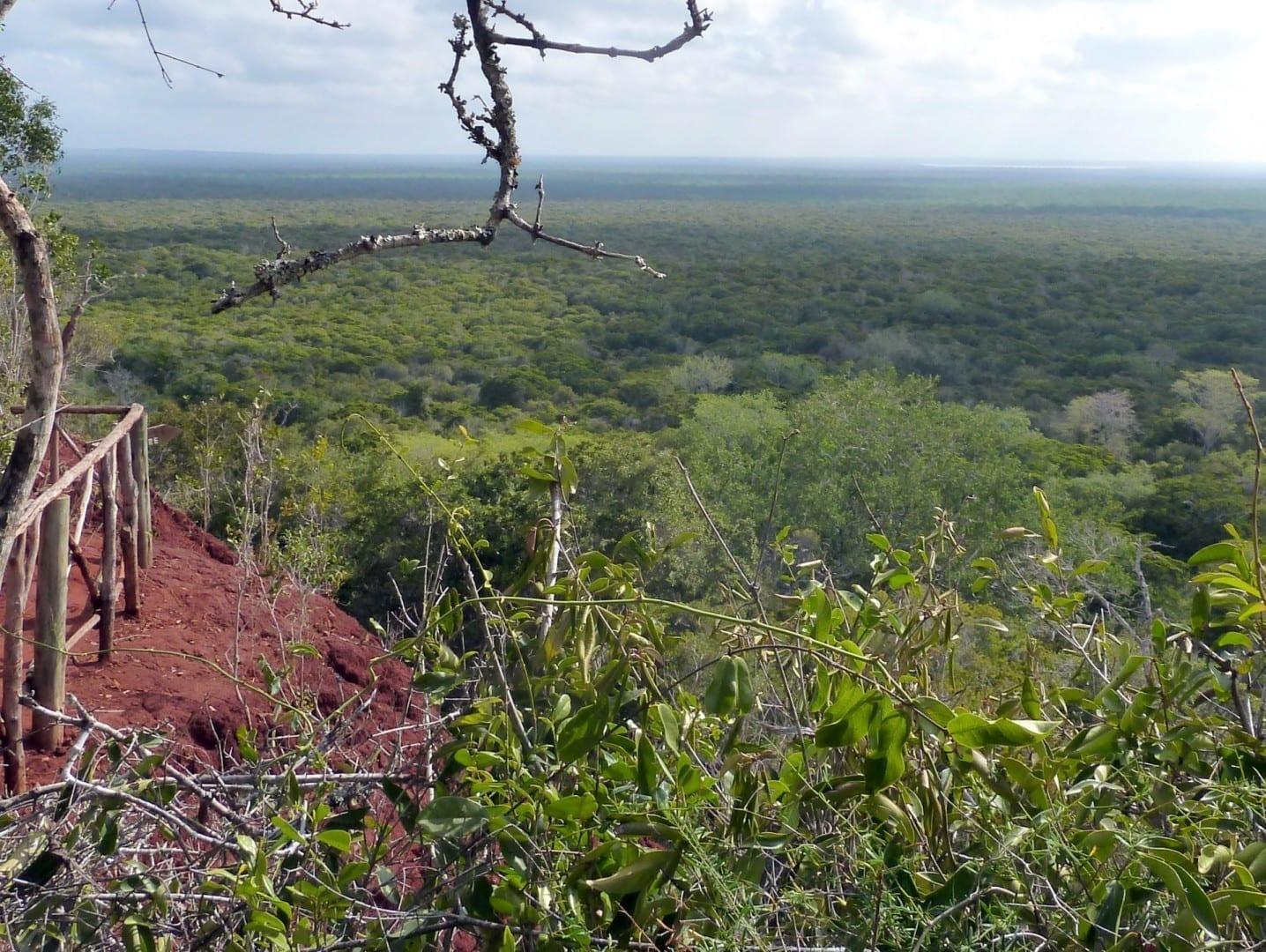 alt=Africa sin fin. Bosque de Arabuko Sokoke - panoramio.jpg Malindi Kenia