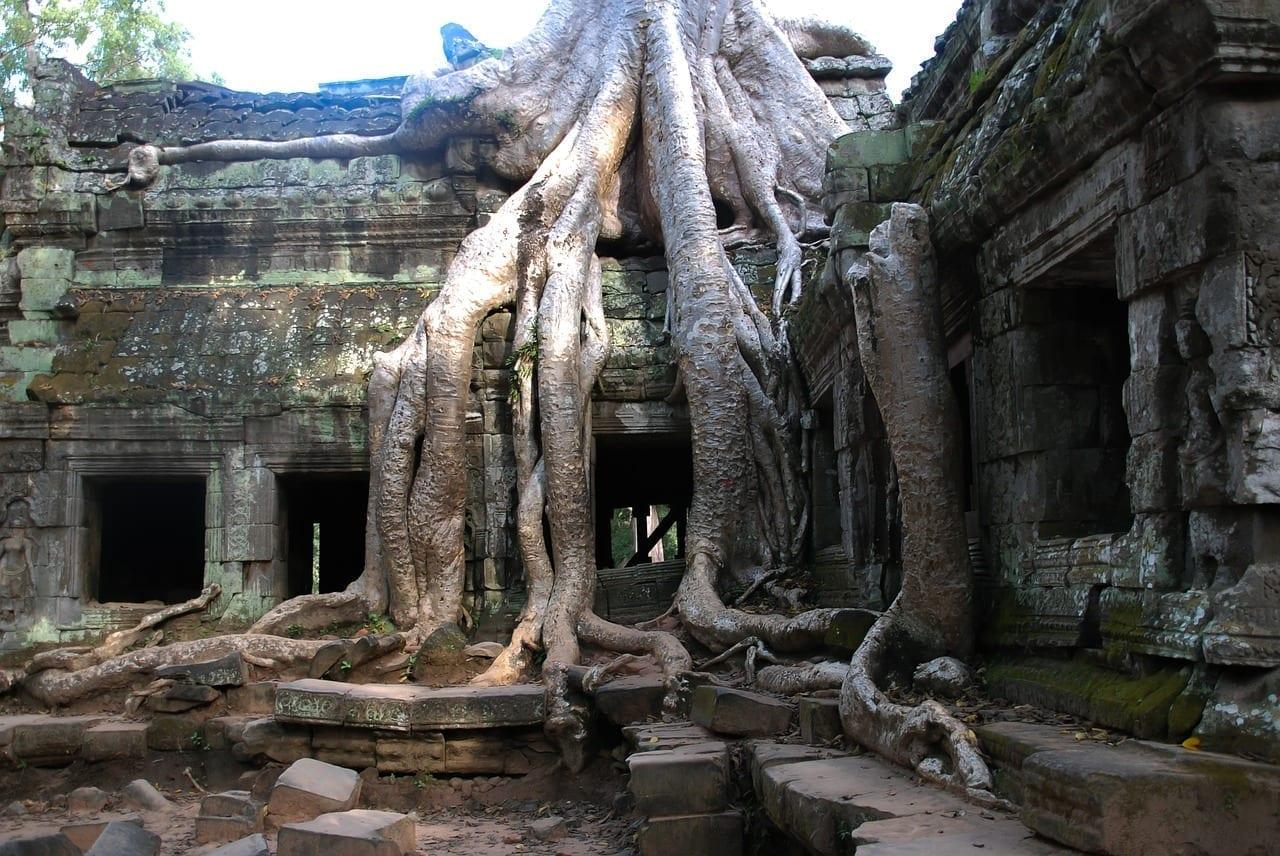 Angkor Wat árbol Turismo Camboya