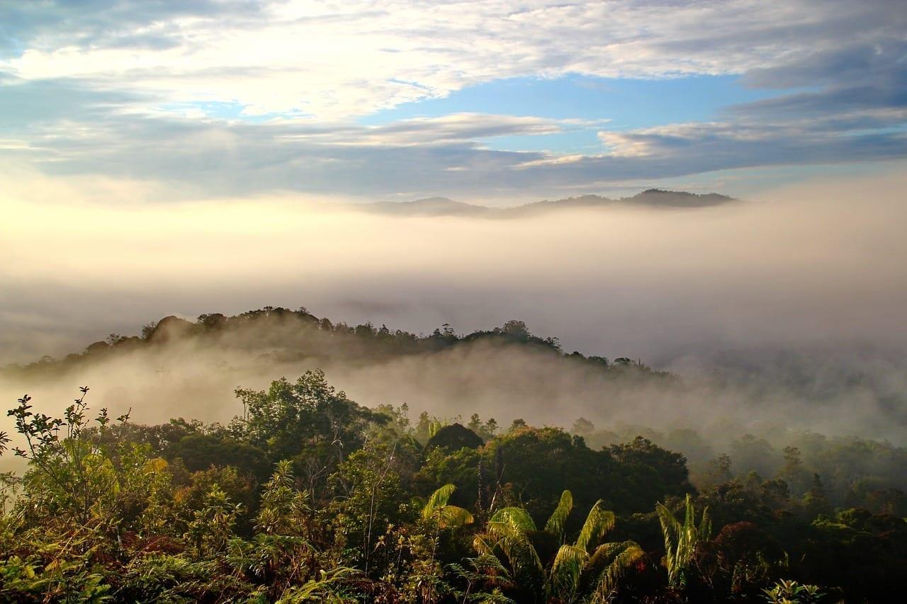 Bario Sarawak Borneo Malasia