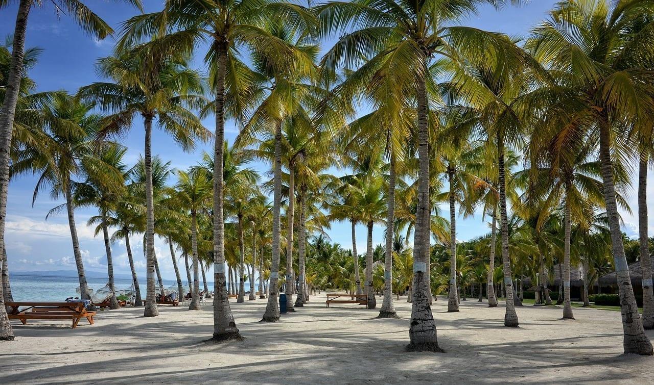 Bohol Estaciones De Bohol Palmera Filipinas