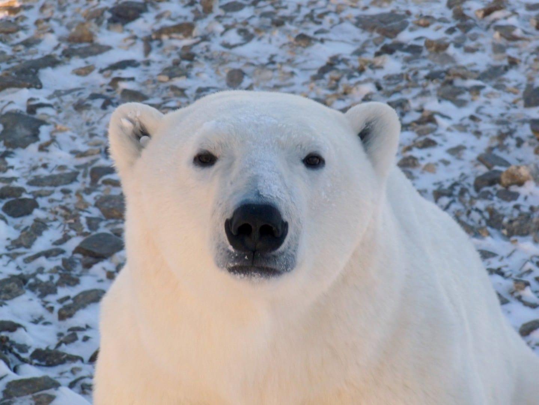 Deadpan Polar Churchill Canadá