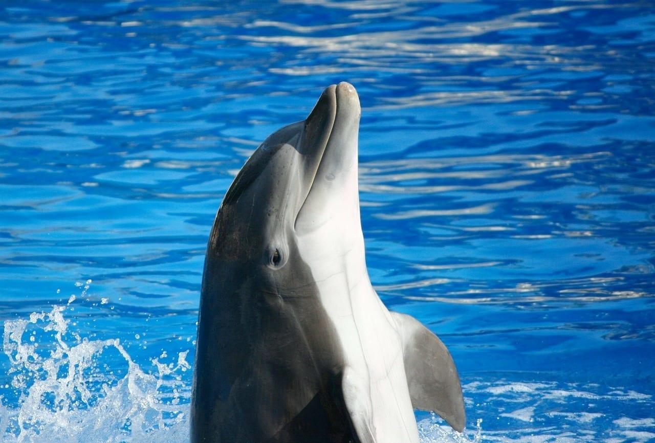 Delfín Mular Mamíferos Marinos Peces España