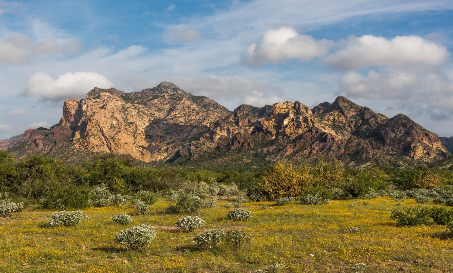 Desierto de Sonora en San Carlos durante la temporada de floración Guaymas México