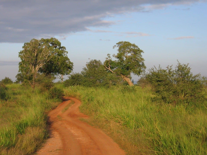 El camino a través del Parque Nacional de Udawalawe, cerca de Ratnapura Ratnapura Sri Lanka