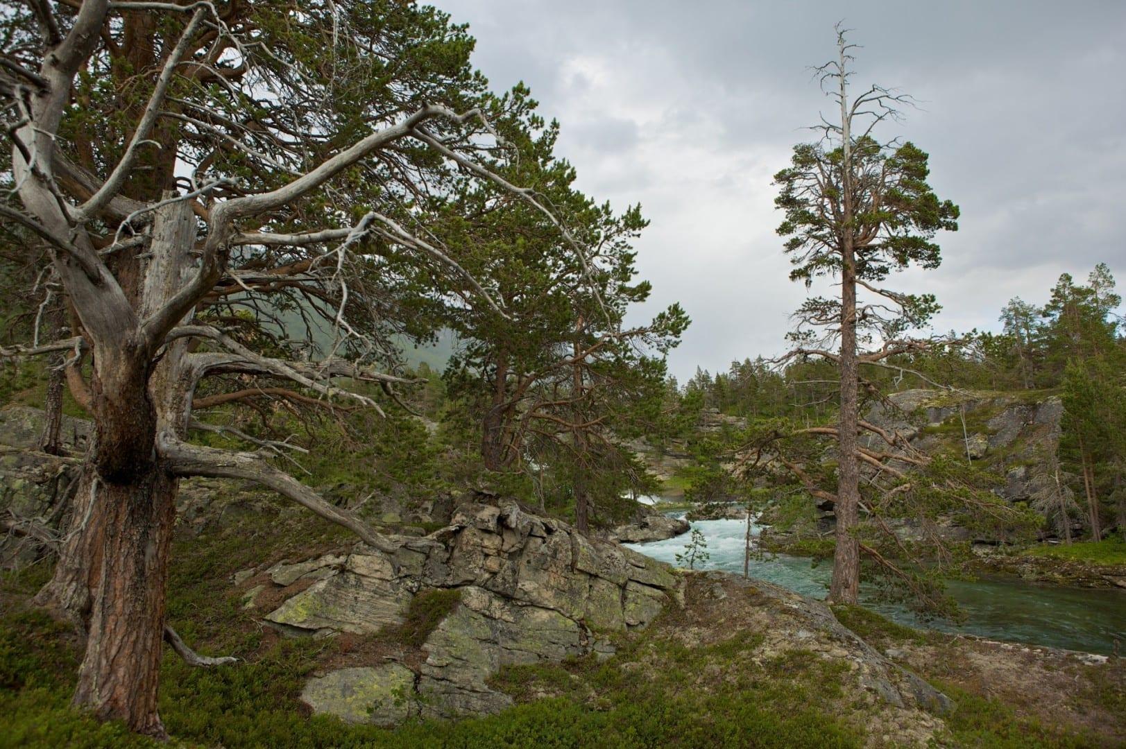 El comienzo del valle en las tierras altas Andalsnes Noruega