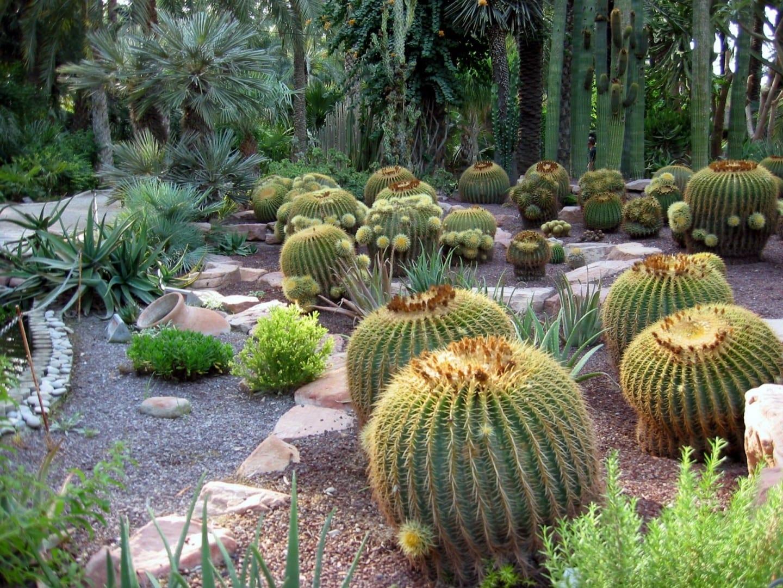 El jardín de cactus del Hort del Cura Elche España
