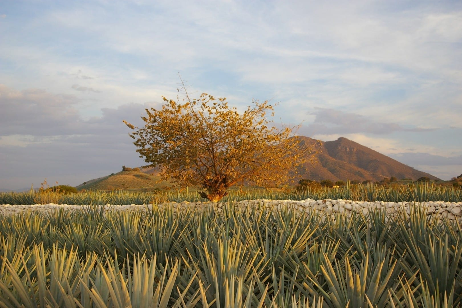 El paisaje del tequila Tequila México
