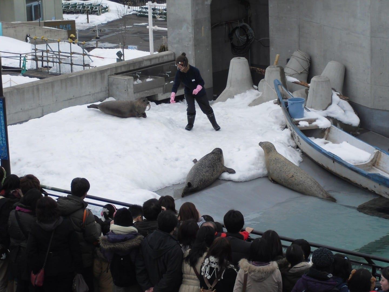 El zoológico de Asahiyama Asahikawa Japón
