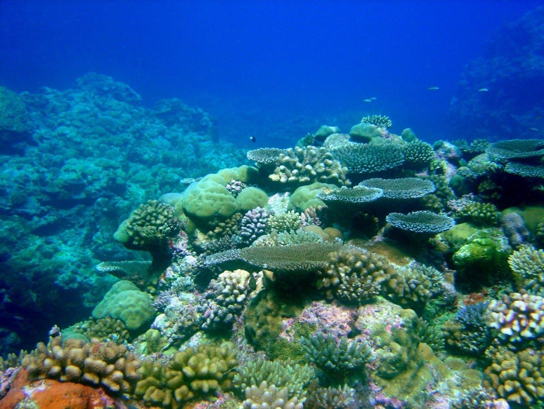 Escena del arrecife de Pohnpei Pohnpei Micronesia