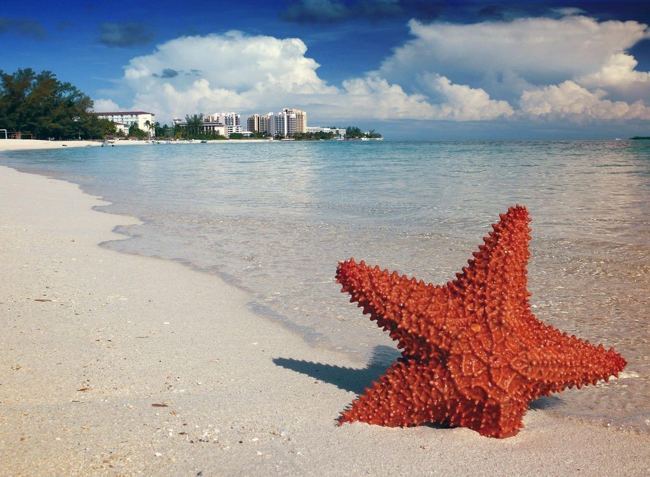 Estrella De Mar Arena Bahamas Bahamas