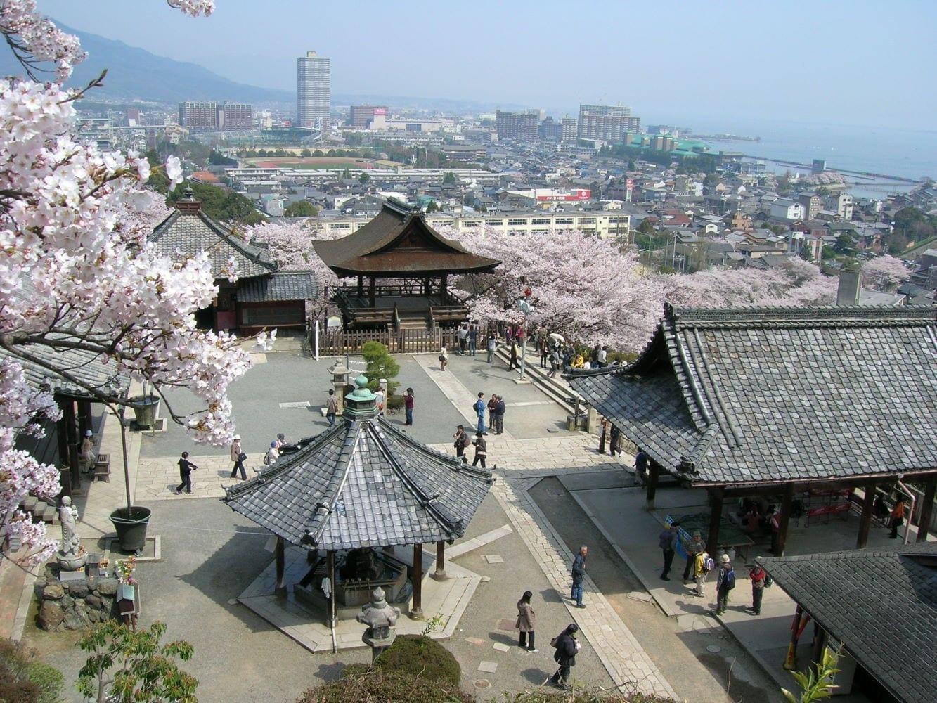 Flores de cerezo en el Templo de Miidera. Otsu Japón