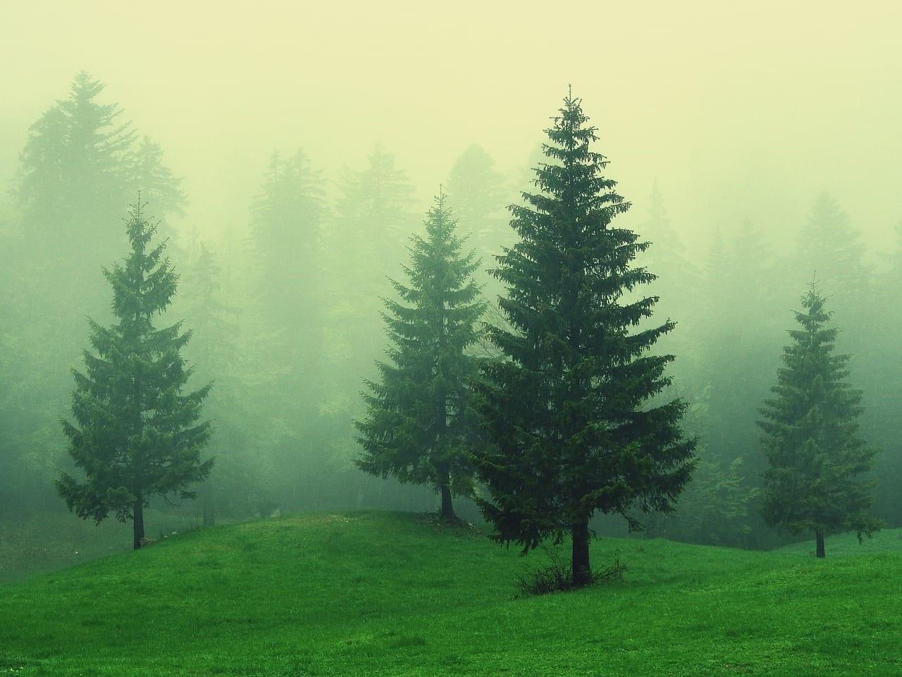 Forestales De Altura Anochecer Portugal