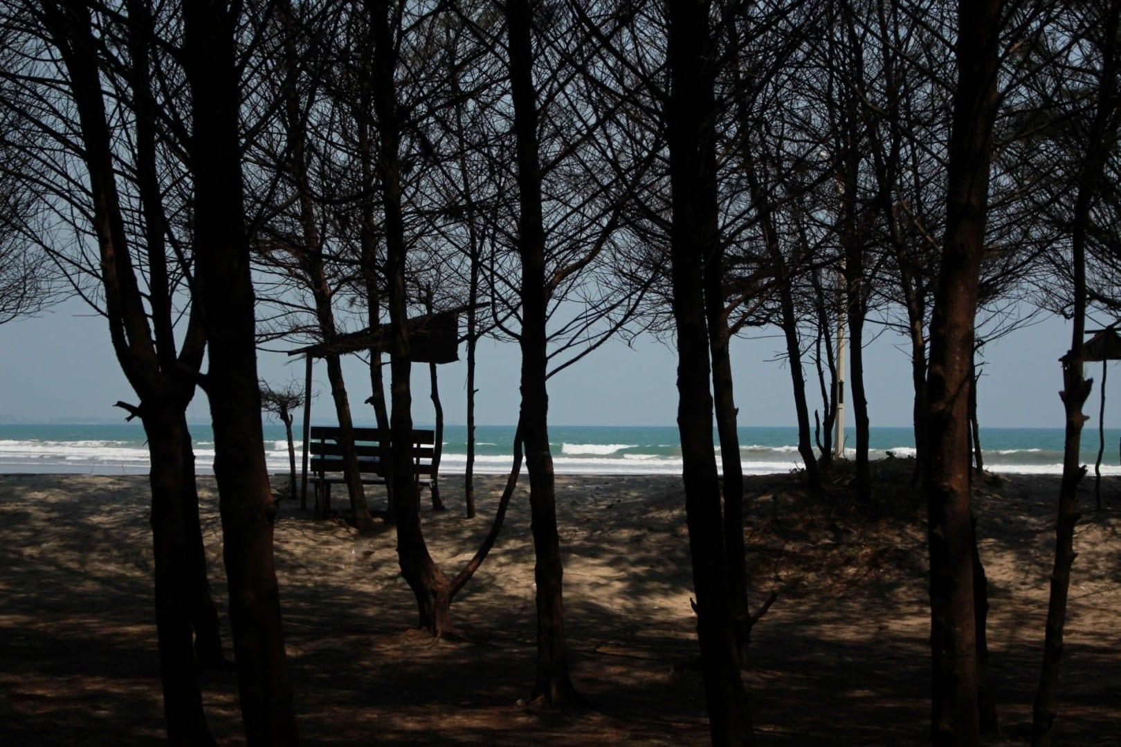 La casuarina crece abundantemente a lo largo de la costa de Bengkulu, haciendo que todas sus playas parezcan distintas de otras playas indonesias. Bengkulu Indonesia