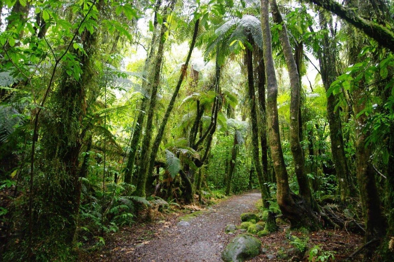 La selva tropical en Franz Josef Franz Josef Nueva Zelanda