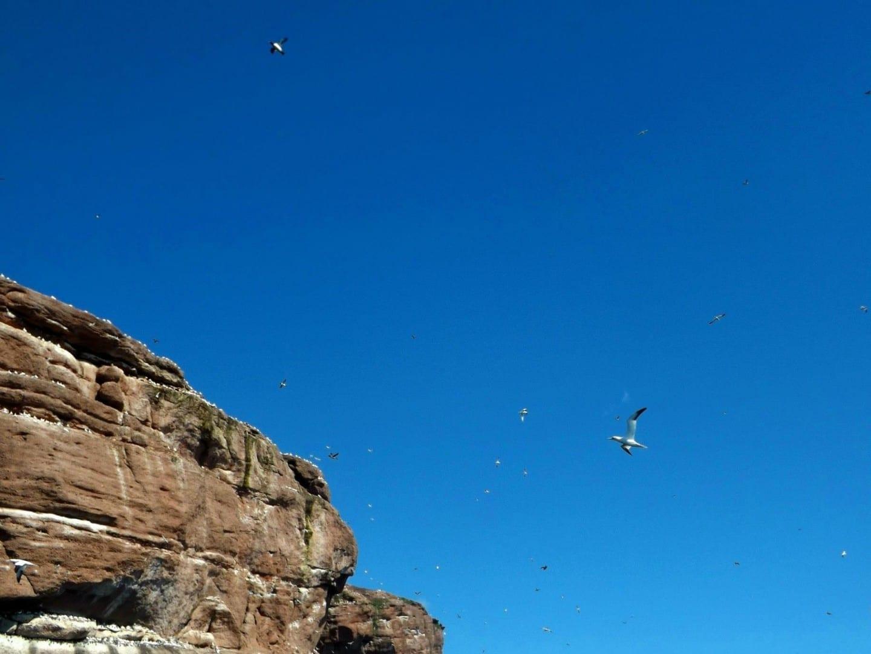 La vida de las aves es abundante en Percé, especialmente en la Isla Bonaventure, hogar de la mayor colonia de alcatraces del norte del mundo. Percé Canadá
