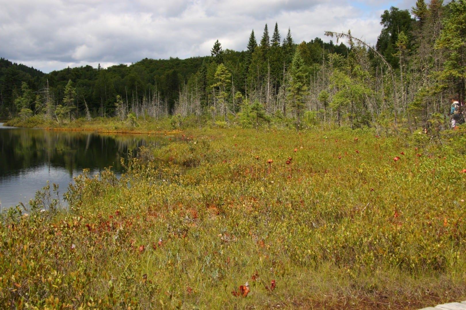 Lago de la Tourbière (Lago Bog) La Mauricie Canadá