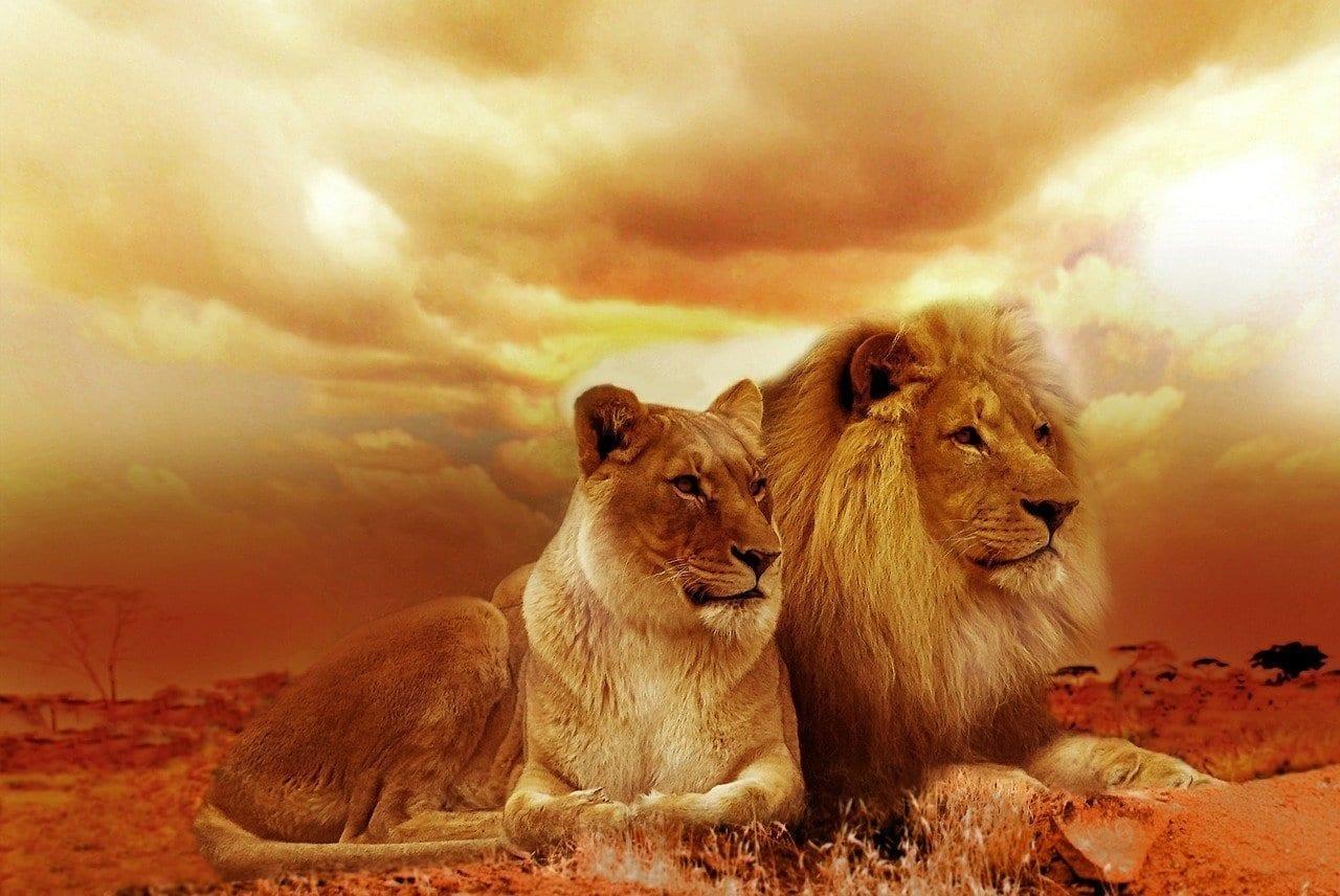 León Safari áfrica España