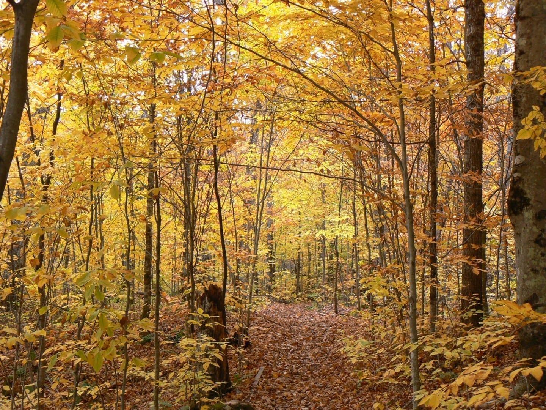 Los colores del otoño en el camino del Lago Gabet La Mauricie Canadá