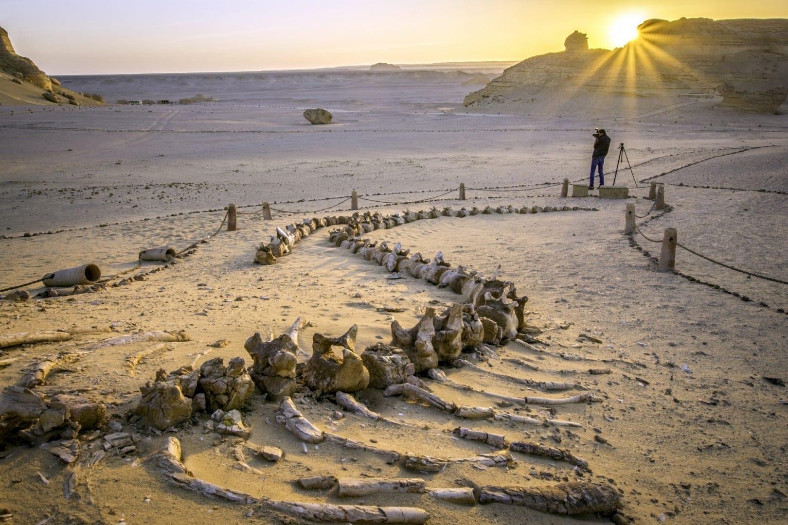 Los fósiles de las ballenas en el Valle de las Ballenas Faiyum Egipto