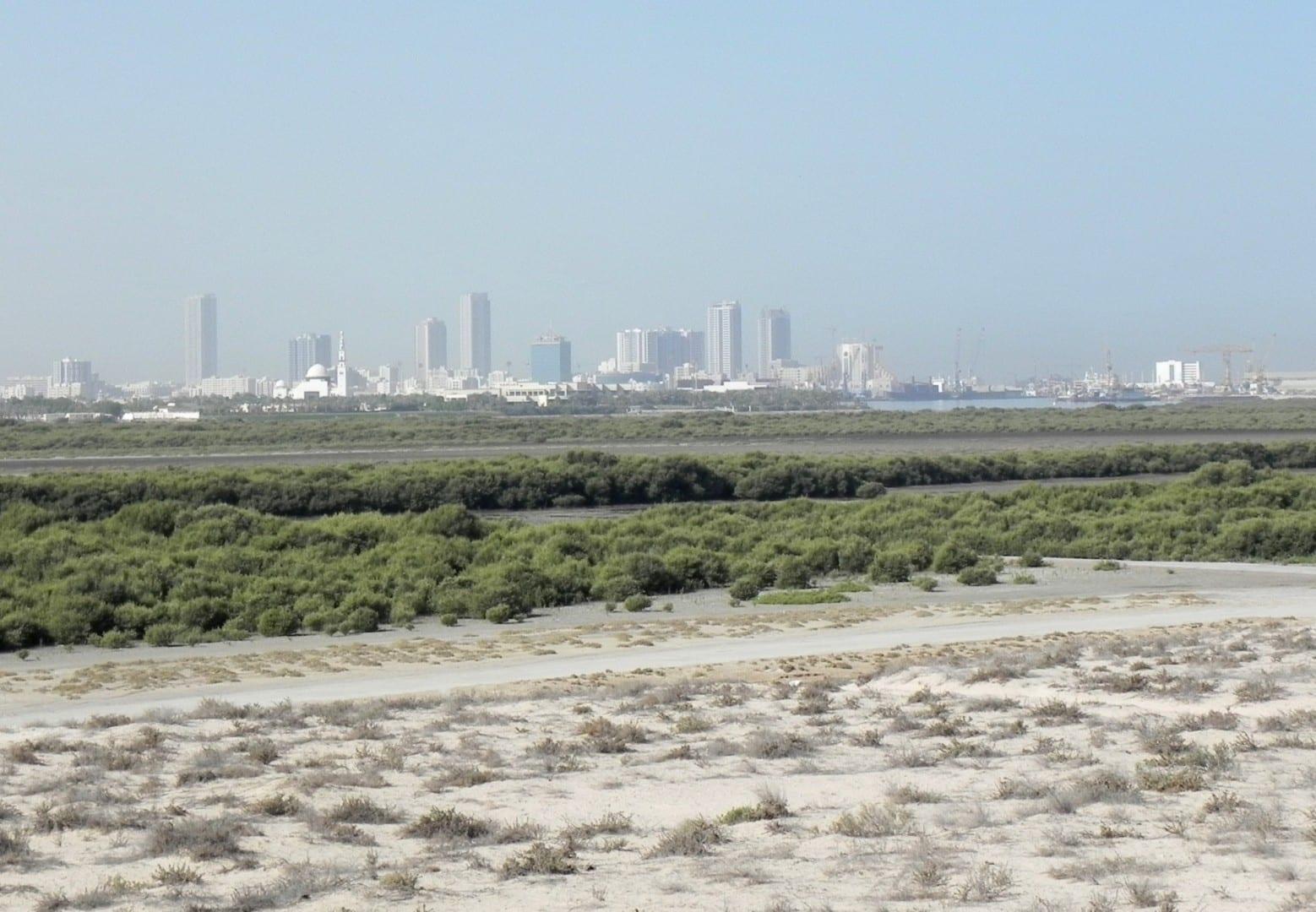 Los manglares, con la ciudad de Umm al Quwain (como se veía en 2012) en la distancia Um al Quwain Emiratos Árabes Unidos
