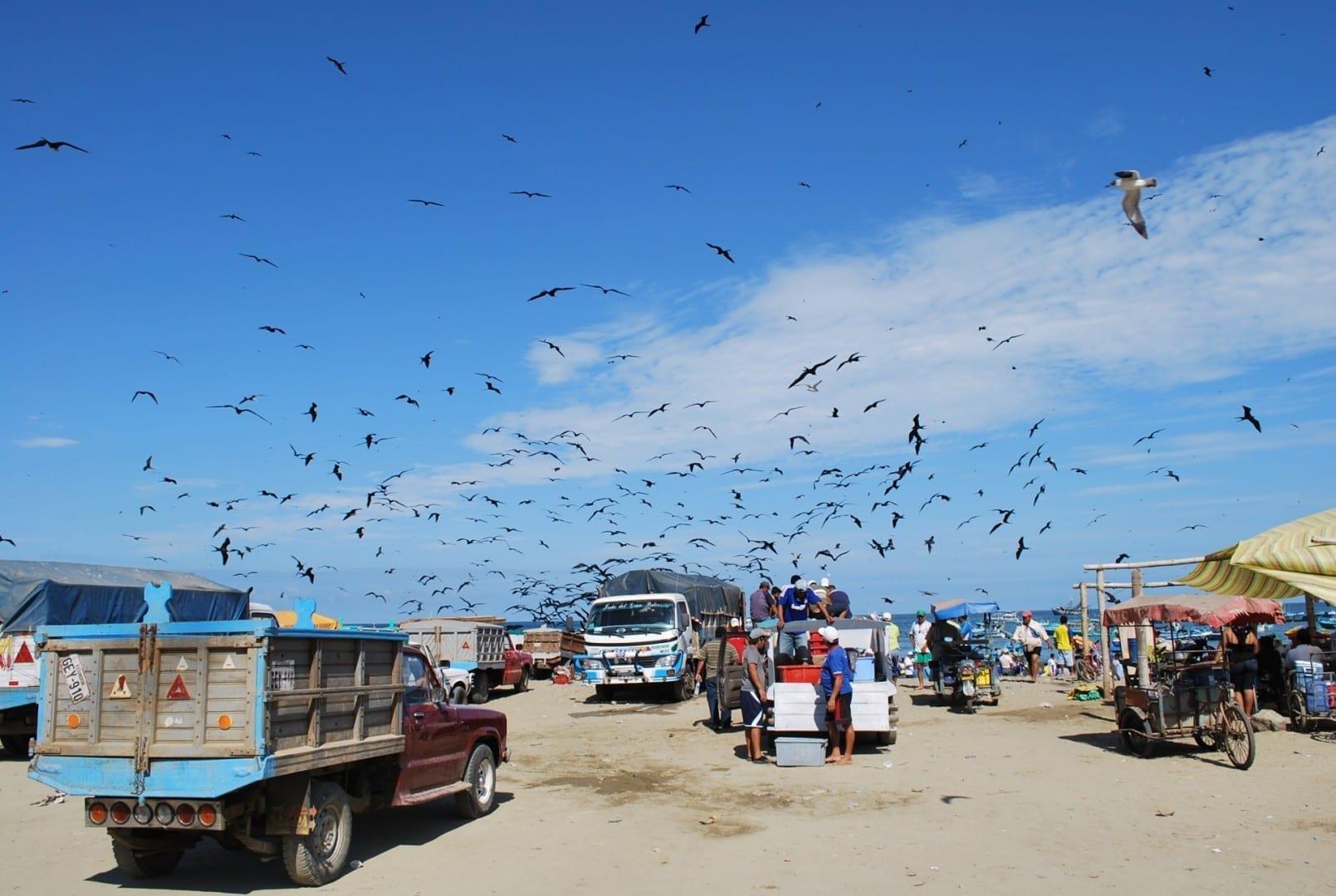 Los pescadores locales atraen a las aves marinas mientras se preparan para cargar la pesca de la mañana en Puerto López. Puerto López Ecuador